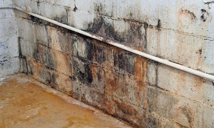 Types of Damp| Causes of Dampness |  Effects of Dampness in the Building | DPC